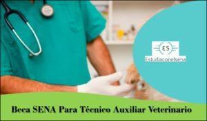 Veterinario Sena